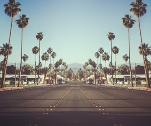 california, palm trees, and hipster image