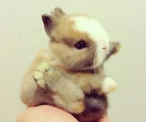 cute, rabbit, and baby image