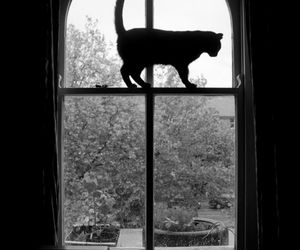 cat, window, and black image