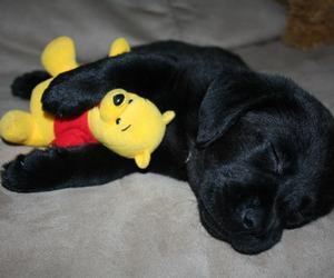 cuddle, labrador, and puppy image