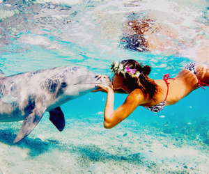 beautiful, dolphin, and girl image