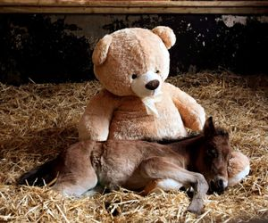 horse, cute, and teddy image