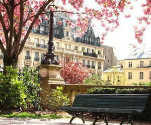 flowers, paris, and pink image