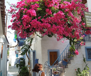 flower, flowers, and Greece image