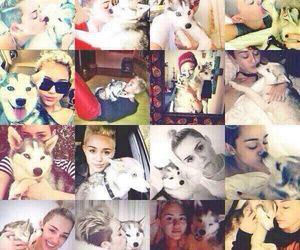 edit, miley, and weloveyoumiley image
