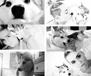 miley cyrus, black and white, and cute image
