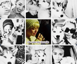 floyd, miley cyrus, and crying image