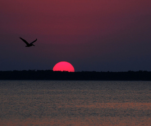 sun, sunset, and summer image