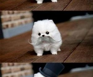 cute, dog, and mustache image