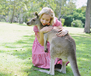 australia, fashion, and kangaroo image