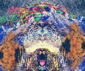 animal, lsd, and psychedelic image