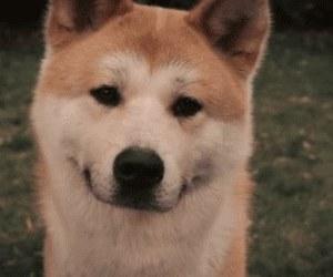 dog, hachiko, and animal image