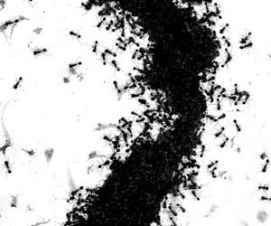 ant, ants, and art image