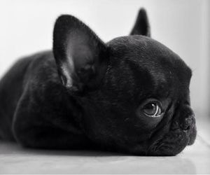 little dog and cute image