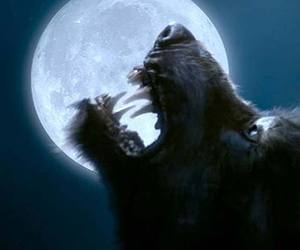 doctor who and wolf image