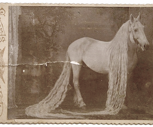 horse, vintage, and long hair image