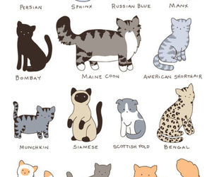 animals, bengal cat, and kawaii image