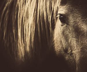 horse, photography, and horse photography image