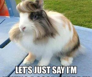 funny, lol, and rabbit image