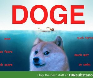 awesome, doge, and funny image