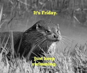 friday, otter, and estudy image