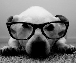 dog, glasses, and animal image