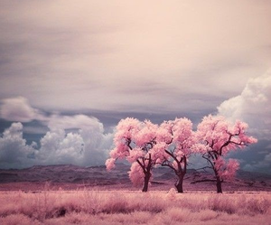 pink, tree, and sky image