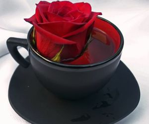 rose, red, and cup image