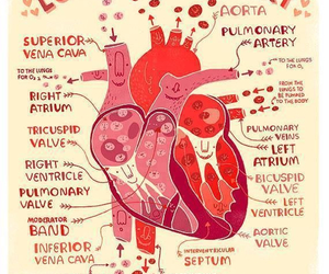 heart, love, and medicine image