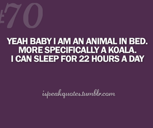 animal, funny, and quote image
