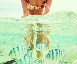 beach, fish, and summer image