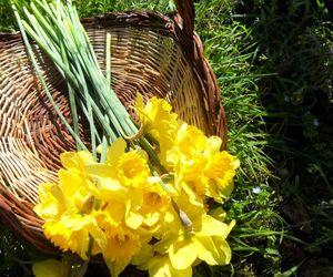 basket, daffodil, and flowers image