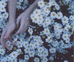 flower, grunge, and soft image