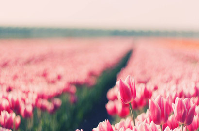 Spring Shared By Krissy On We Heart It