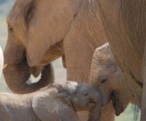 elephant cutie love wild image
