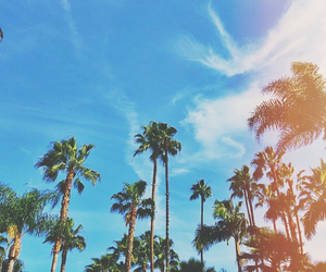 background, palmtrees, and quality image