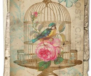 bird, cage, and flowers image