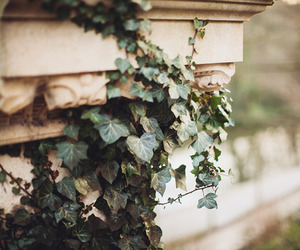 aesthetic, nature, and plants image