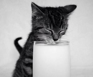 cat, cute, and milk image