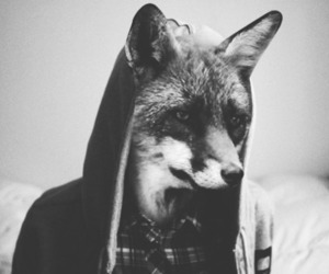 fox, black and white, and boy image