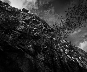 bats, black and white, and cave image
