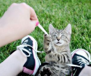 cat, cute, and shoes image