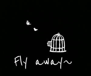 overlay and fly image