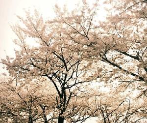 flowers, korea, and seoul image