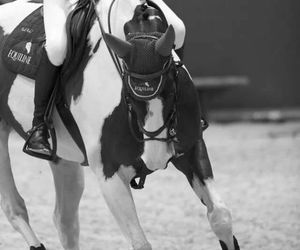 black and white, equestrian, and gallop image