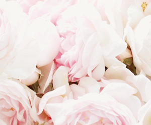 header and flowers image