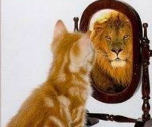 lion, cat, and mirror image
