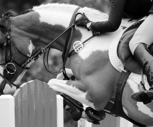 black and white, equestrian, and passion image