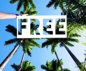 free, summer, and palm trees image