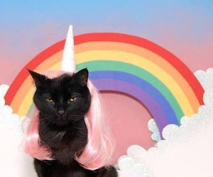 cat, rainbow, and unicorn image